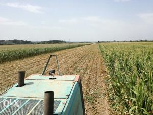 SILAZA kukuruzna, tritikal