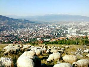 KURBANI-Kurban SARAJEVO,CENTAR (U TOKU CIJELE GODINE))