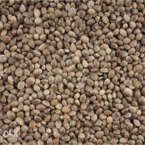 Hrana za ptice-konoplja 1 kg