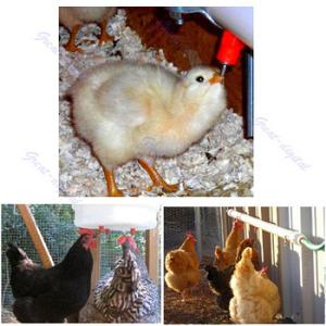 Automatske nipl pojilice za kokoške