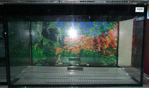 Četverougli akvarijum za ribice 81l 65x32x39