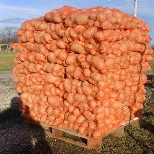 Krompir mladi crveni i bijeli