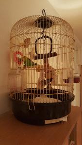 Papagaj tigrica s kavezom kraljevska izrada