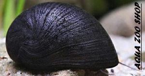 Military Helmet Snail