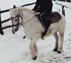 Konj konji