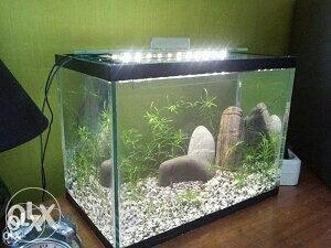 Akvarijum 10l Gratis 2 ribice, biljke i kamencici
