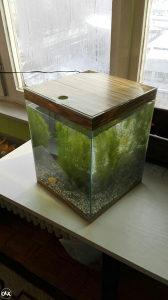 Akvarijum 20l Gratis 2 ribice, biljke i kamencici