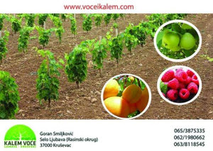 Vocne i lozne sadnice, najbolji kvalitet