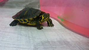 kornjaca sa terarijem i hranom