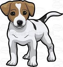 Jack Russell terier-kratkodlaki