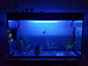 Akvarijum sa ribicama citaj pod detaljno