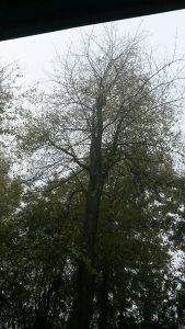 Posao - obaranje stabala krosnji drva drvo Sarajevo i o