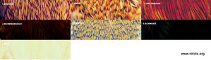 4620/1/2 Byron Perje Indijske koke - cree