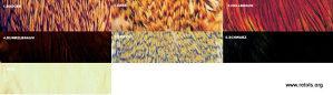 4620/1/1 Byron Perje Indijske koke - bjelo [13263]