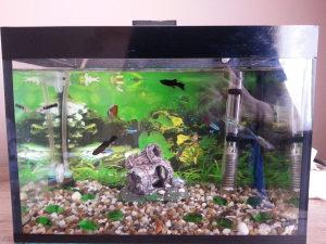 Akvarij sa 13 ribica i svom opremom