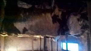 tovni bikovi