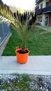 Prodaja palme