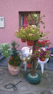 Ukrasno drvo za vrt