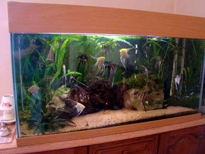 Akvarijumi raznih velicina