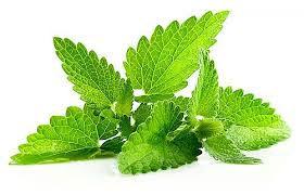 Nana - Ljekovite biljke
