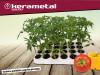 Sadnica: patlidžan, paprika,paradajz