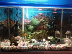 Akvarium sa Ribicama