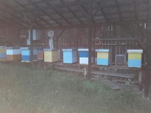 Pčele i oprema...