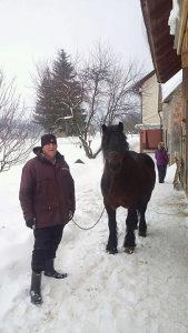 Konja pastulj