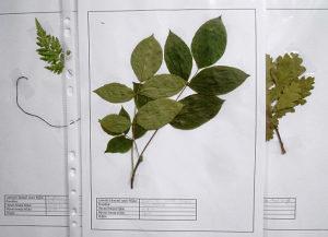 Herbarijum-biljke za sve škole