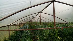 Plastenik,poljoprivreda