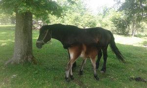 Kobila i zdrijebe