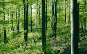 Kupujem šumu