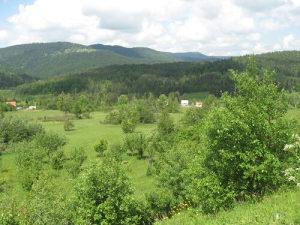 Zemljište Pale Mokro ..Kadino Selo