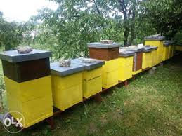 Pčelinji rojevi i zajednice