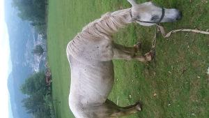 Kobila radna zeka