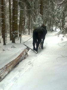 Konj radni sa hormom i kolima.