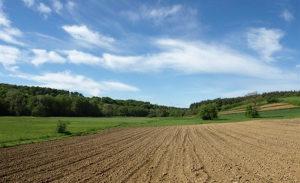 Kupujem zemljiste zemlju parcelu 5 hektara 50 dunuma