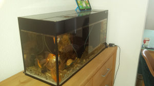 Akvarijum sa zlatnim ribicama 120 l, akvarium, aquarium