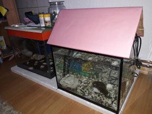 Gupi ribice i akvarij