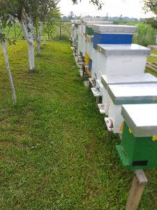 Pčelinje košnice i rojeve