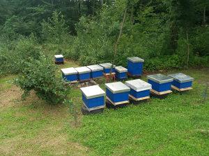 Pčele sa sandukom