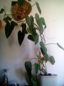 biljke i cvijece