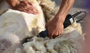 Tražim vunu ovce pramenke