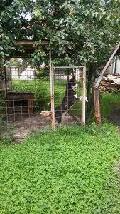Boks kavez za psa pse