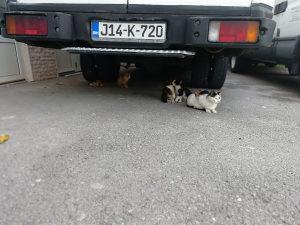 Poklanjam mačiće