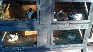 Kavez za zeceve