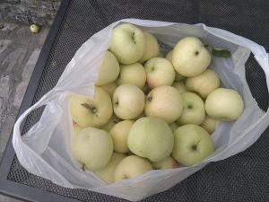 Petrovke jabuke