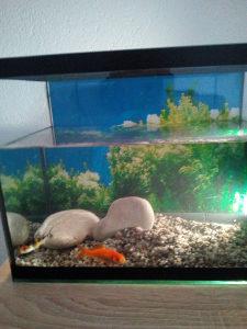 Akvarijum ribice