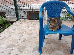 Mačiće mačke