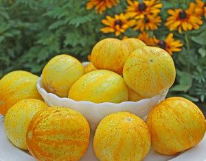 Krastavac ` Lemon ` / 10 semena